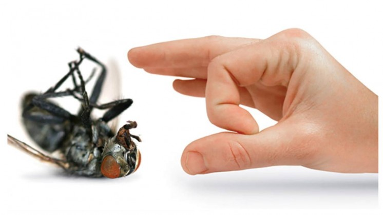 How To Avoid Urban Pests In Our Homes